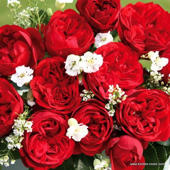 Róża Out of Rosenheim®